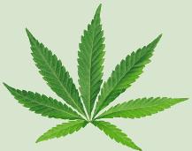 Tulsa Cannabis Trimming